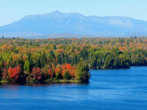 The color in these trees signal the start of another Autumn in Maine.