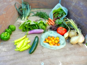 Typical weekly farm share Black Bear Food Guild