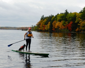 Out for a paddle on my home built SUP with my cattle dog Sadie along for the ride